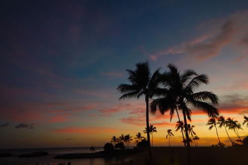 DSCN0661A-Sunset-Palms