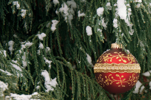 DSC_2588A-Christmas-Ornament-In-A-Snowy-Tree