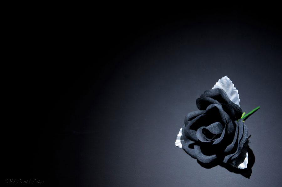 DSC_8589A-Black-Rose