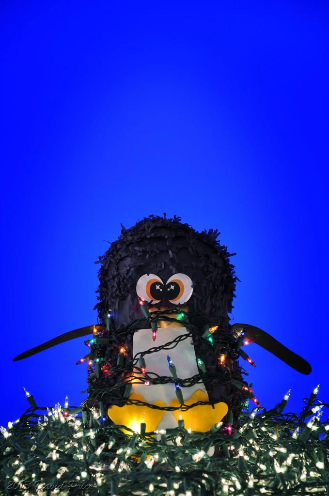 Penguin-In-The-Snow